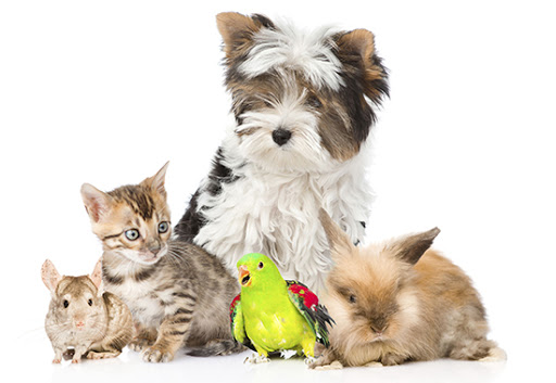 gyvūnų prekės internetu